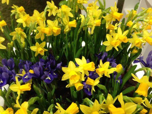 Foto 8_Springtime (2)