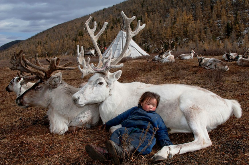 35_sardar_h_child-sleeping-with-totem-deer_west-taiga_hovsgol-province_2006-klein