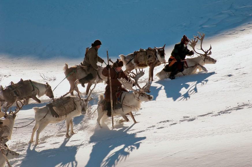 Reindeer in Deep Snow