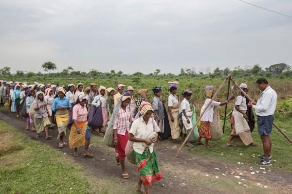 Auf der Mogulkata-Teeplantage stehen Pflückerinnen Schlange, um die gesammelten Teeblätter wiegen zu lassen. Das Management-Personal auf der Plantage trägt Hemden und kurze Hosen als Erinnerung an die Kolonialisierung durch Großbritannien.