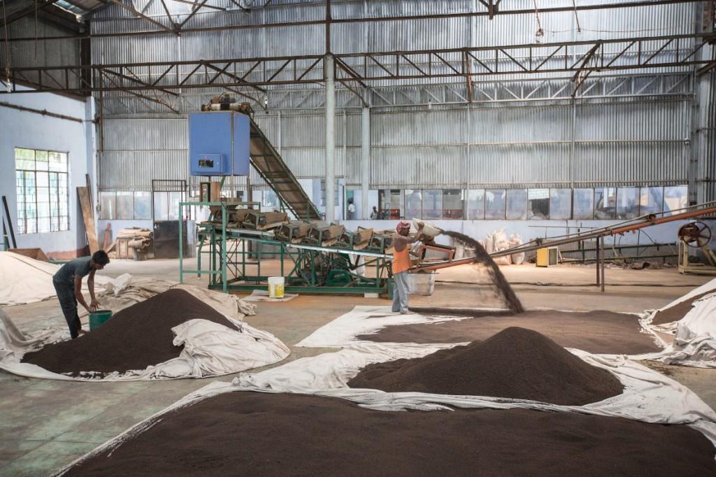 In der Teefabrik in Mogulkata werden die Blätter verlesen, fermentiert und getrocknet.Die jährliche Produktion beträgt 700.000 Kilo.