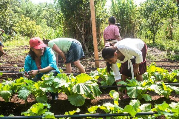 62_nicaragua gemuesebeet_Fundación entre Mujeres, FEM KLEIN